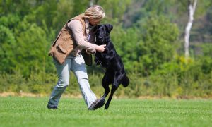 Gratis artikel De Jager – Hoe train je je hond op effectieve wijze, interview met toptrainer Philippa Williams