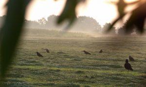 'Verbod op lokmiddelen zorgt voor consternatie' – De Jager #12