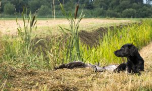 Workshop voor (voor-) jagers van jachthonden door Nel Barendregt – Frodo & Co
