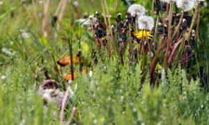 WBE's beloond voor bijdrage aan toename biodiversiteit – Vereniging Nederlands Cultuurlandschap