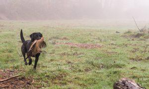 Instructeursopleiding voor apporterende jachthonden – Doorn