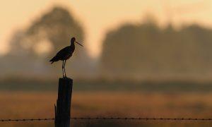 Provincies zetten in op behoud van weide- en akkervogels – BIJ12
