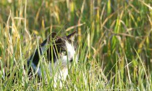 Katten killen honderd miljoen vogels – Trouw