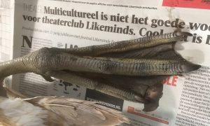 Oog voor detail: Zwaan – Volkskrant