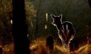 Jagersvereniging vraagt aandacht voor jagersonderwerpen tijdens coalitieonderhandelingen – Drenthe