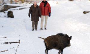 RECRON vraagt hoogste prioriteit voorkomen van Afrikaanse varkenspest aan minister LNV
