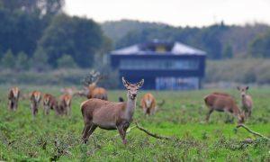 'Gerapte' of 'ongerapte' natuur? –  De Buitendienst (Zapp) over de Oostvaardersplassen