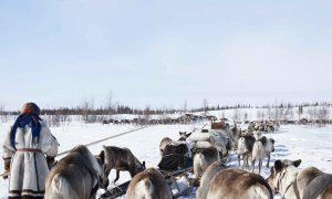 Jamalië, het ijskoude noorden van de Oeral – gratis artikel Buit #4