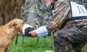 Nimrod 2018, ervaring telt in prestigieuze jachthondenwedstrijd – De Jager #12 2018