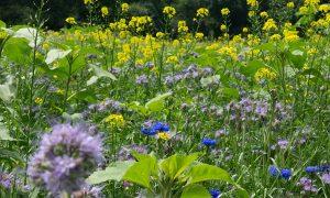 Oproep: zaai zoveel mogelijk hectares biotoopmengsel 'Jagersvereniging' in!
