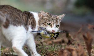 Snoezige sluipmoordenaars: uw kat beschadigt de natuur – HP De Tijd