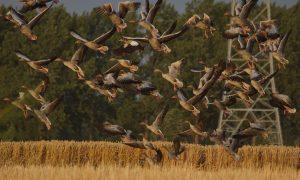 Samenwerking LTO, FPG, Jagersvereniging – naar een duurzaam wildbeheer in Nederland