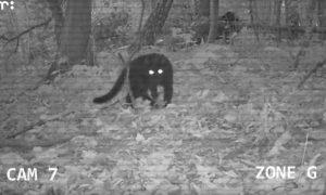 Een schattige seriemoordenaar – De Buitendienst (Zapp) over zwerfkatten