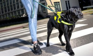 Hondenbaan – Buit 2 2019