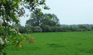 Doe mee en plant! 100.000 bomen en struiken in Gelderland