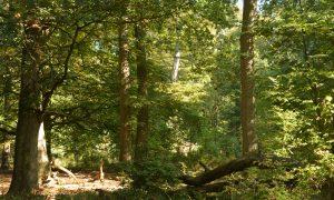 Naar een natuurlijker bos – sleutelrol voor de jacht – De Jager augustus 2019