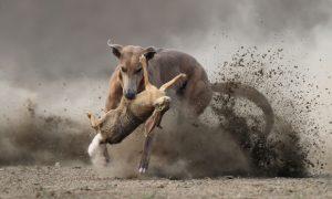 Strop voor stropers: taakstraf en boete, auto's en hazewindhonden verbeurd verklaard – Omroep Brabant