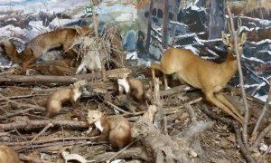 Jagersvereniging draagt expositie kosteloos over aan NOJG