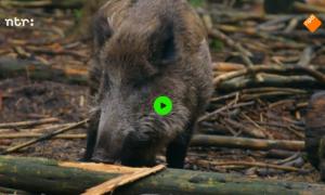 Waarom jagen jagers? – De Buitendienst