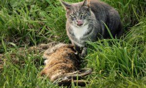 Minister beantwoordt vragen D66 over predatie van katten