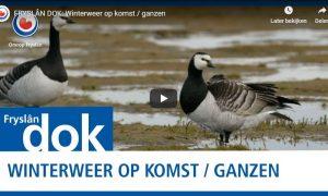 Winter op komst – Fryslân DOK
