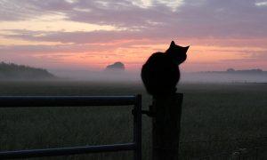 Rechtswetenschapper Arie Trouwborst 'Loslopende katten groot maar oplosbaar probleem' – De Jager