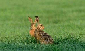 CDA stelt Kamervragen over de Rode Lijst zoogdieren