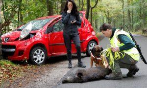 Verbond van Verzekeraars: schadelast door aanrijdingen met dieren neemt toe