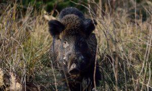 Persbericht – Volledig stopzetten beheer wilde dieren onnodig en onverstandig
