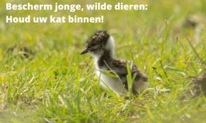 Jagers in Noordoost-Twente doen dringende oproep: 'Houd honden aan de lijn en katten binnen' – AD.nl