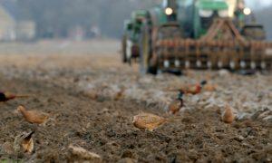 Natuurinclusieve landbouw: haalbaar of verre toekomstmuziek?