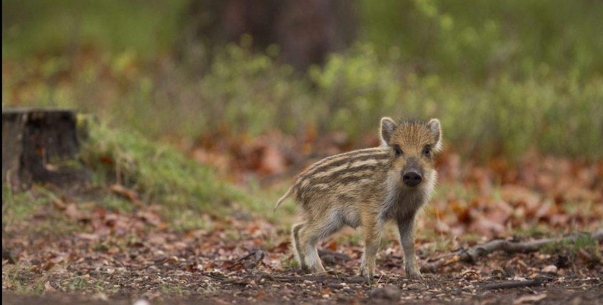 Bescherm jonge, wilde dieren