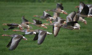Oproep ZLTO aan provincie Noord-Brabant: schrap leges voor vergoeding faunaschade