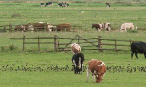 Evaluatie: Agrarisch natuur- en landschapsbeheer op koers, meer nodig