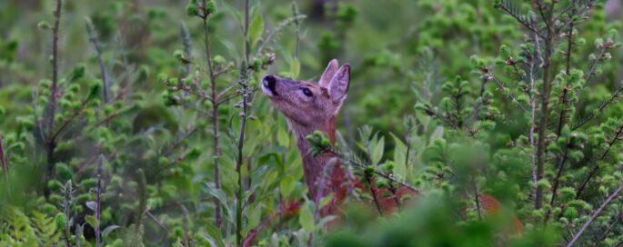 Junior Jagers Webinar 'Behandeling van wild en trofeeën'