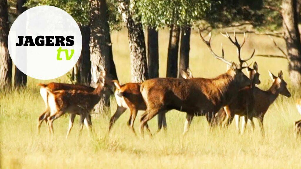 JagersTV aflevering 12 – Slachten met Herman ter Weele (hert) en de hertenjacht
