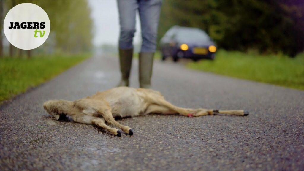 JagersTV aflevering 9 – Wildspiegels en valwild